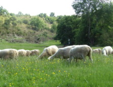 Nos moutons